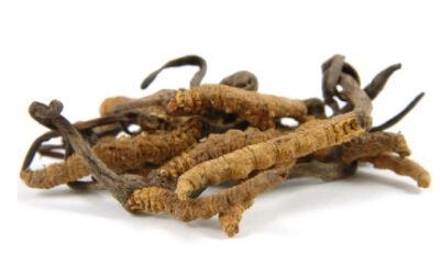 Biostymulujące właściwości entomopatogenicznych grzybów z rodzaju Cordyceps